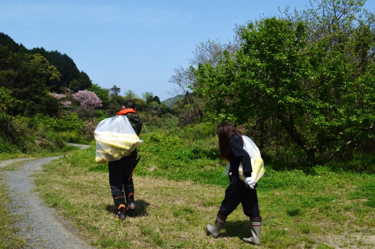 国産メンマ タケノコ山